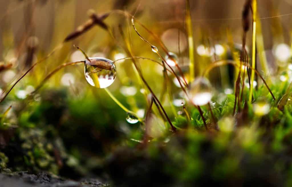 photo herbe mouilée