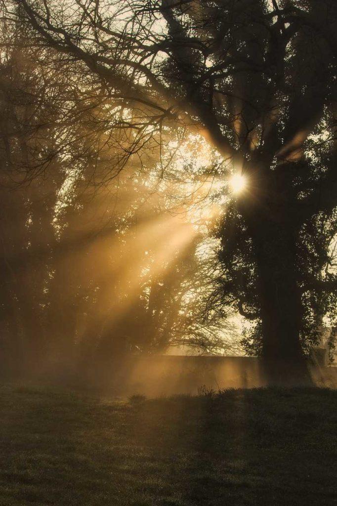 rayons de soleil à travers les arbres